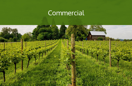 A vineyard with beautiful grounds. Click to learn more about commercial services.