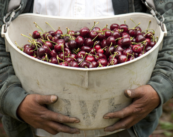 A bucket of cherries.