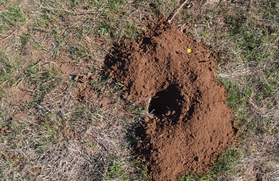 A gopher hole